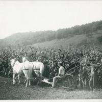 68_HarvestingCorn.jpg